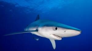 Que savez-vous sur les requins ?