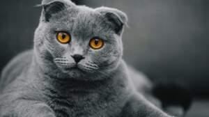Parlez-vous le langage des chats ?