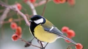 Savez-vous reconnaître les oiseaux du jardin ?