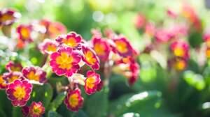 Saurez-vous reconnaître ces fleurs qui annoncent le printemps ?