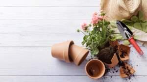 Connaissez-vous le vocabulaire du jardinage ?
