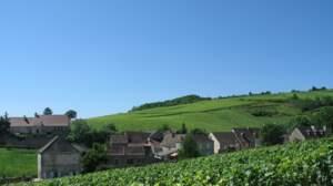 Vins de Bourgogne : au top ou besoin d'une mise à niveau ?