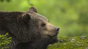 Connaissez-vous bien la faune française ?