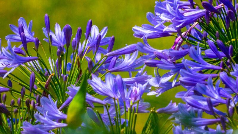 Êtes-vous incollable sur les fleurs de l'été ?