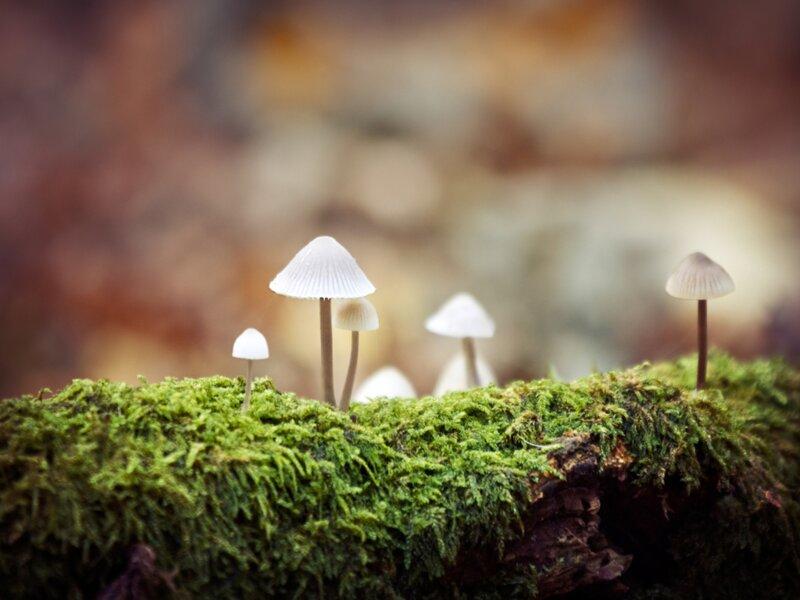 Amateurs de champignons, testez vos connaissances