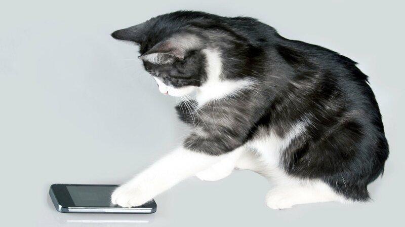 Savez-vous parler le langage du chat ?