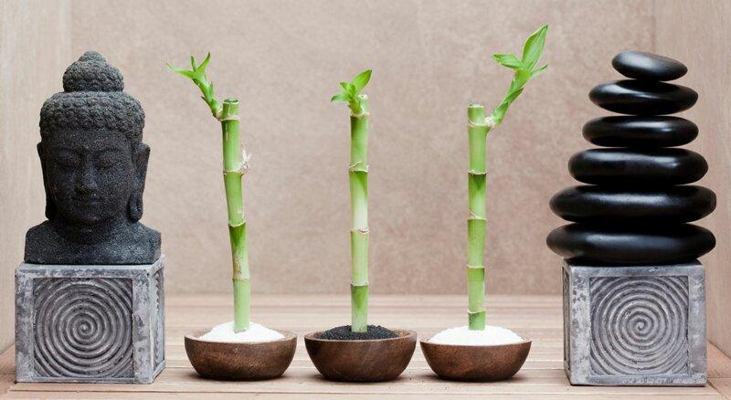 Maîtrisez-vous l'art du feng shui ?