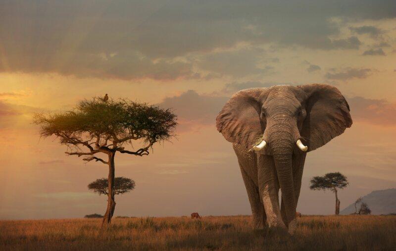 Que savez-vous de la faune sauvage au Kenya ?