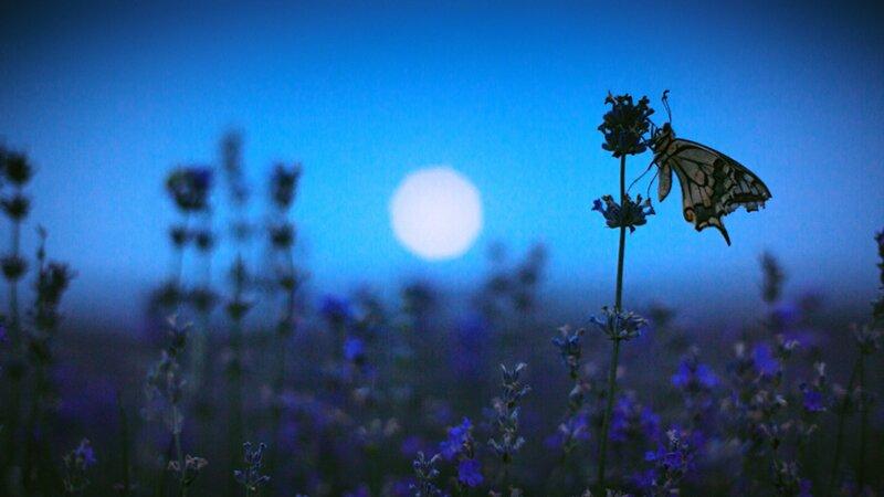 Savez-vous jardiner avec la lune ?