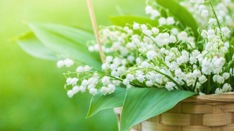Muguet et traditions du 1er mai : êtes-vous un expert ?