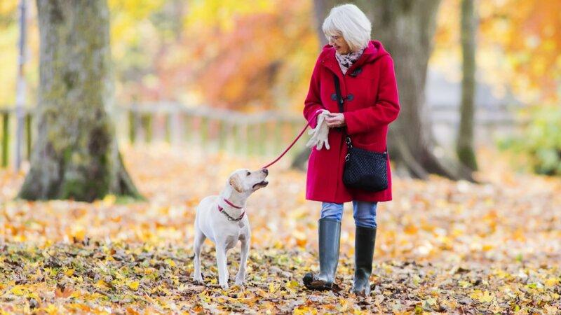 Connaissez-vous bien votre chien et ses besoins ?