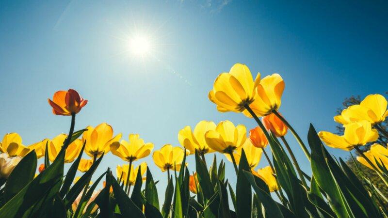 Que savez-vous sur le printemps ?