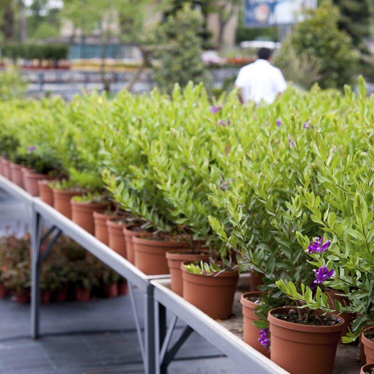 plante exterieur resistant au froid plante qui resiste au. Black Bedroom Furniture Sets. Home Design Ideas